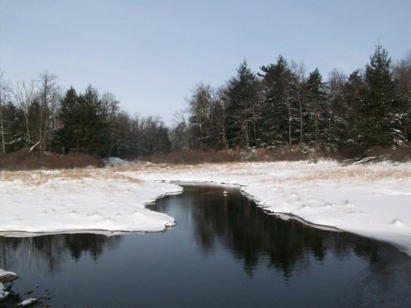 Small beaver pond
