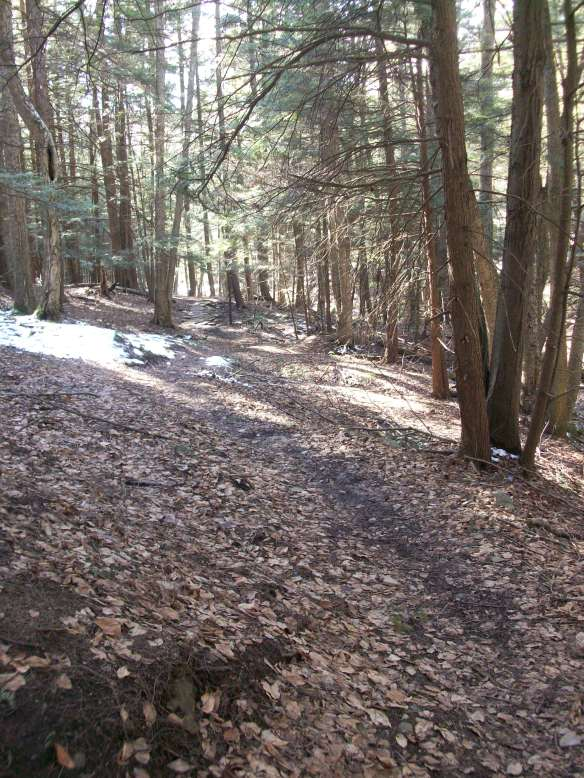 Hemlock forest along the North Woods Trail