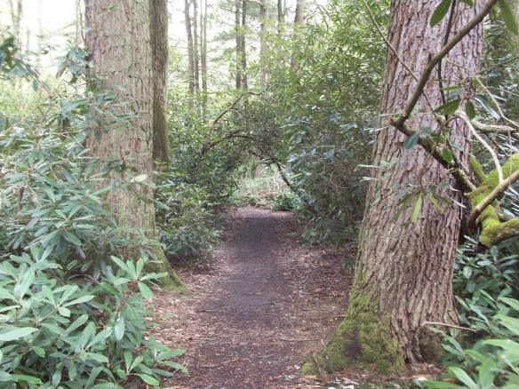 Rhododendron tunnels- Alan Seeger Natural Area