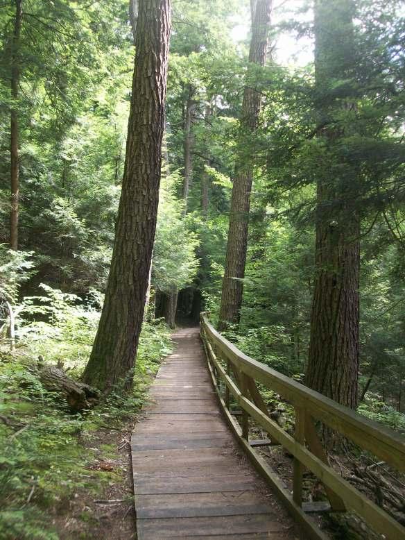 Boardwalk above the gorge