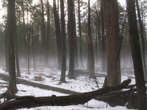 Forest in the mist- along the Evergreen Trail
