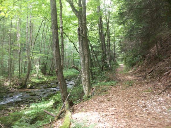 Trail along Clendenin Branch