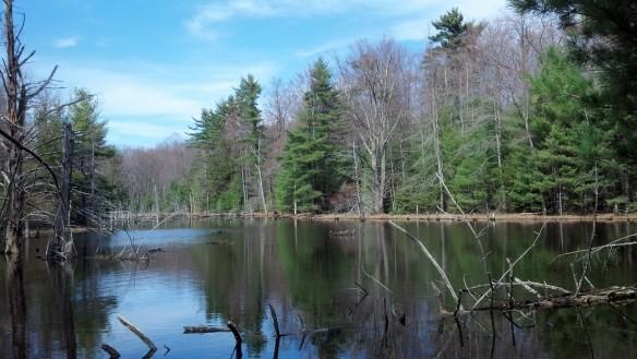 High Knob Pond