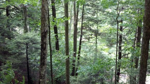 Beautiful forests along Pole Bridge Run