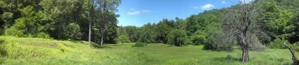Meadow along Shanerburg Run