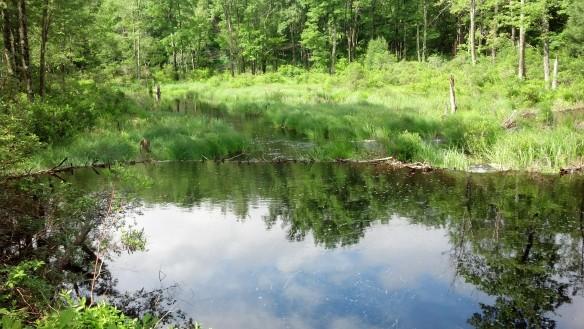 Beaver dam on Choke Creek
