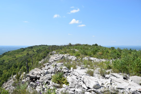 Open ridge top along the proposed Appalachian Trail re-route.