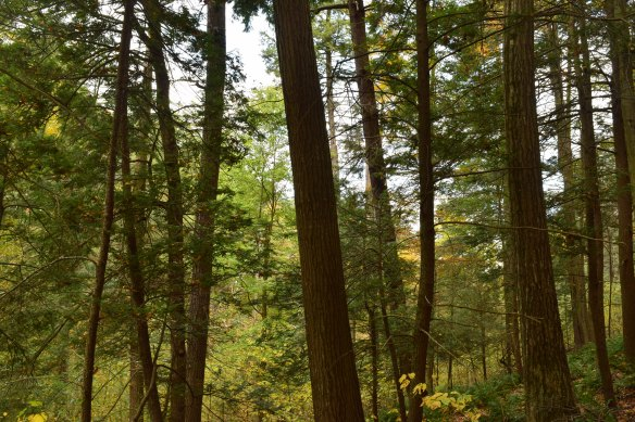 Hemlocks Natural Area